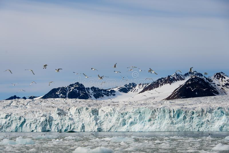 Arctic landscape in Svalbard with glacier in summer time. With sea and reflection royalty free stock photo