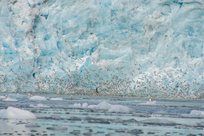 Gacier calving in Svalbard close up. Arctic landscape in Svalbard with glacier in summer time stock images