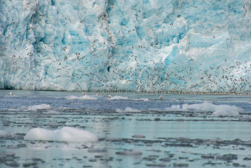 Gacier calving in Svalbard close up. Arctic landscape in Svalbard with glacier in summer time royalty free stock photography