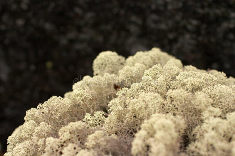 Arctic mountain moss stock photo
