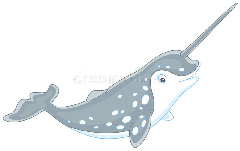 Arctic narwhal. Vector illustration of a grey spotted narwhal with a long tusk, on a white background royalty free illustration