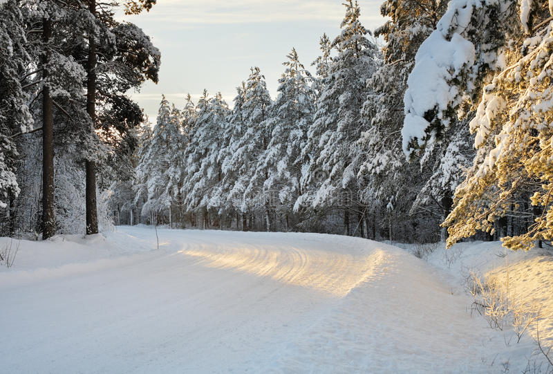 Arctic road. Snowy arctic winter road in the forest stock photo