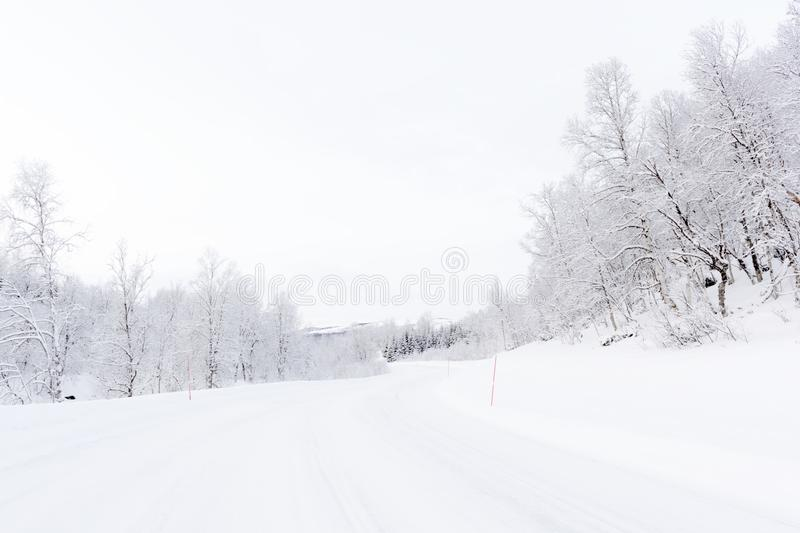 Arctic road with snowcovered forest. In during polar night, Balsfjord, Norway royalty free stock photography