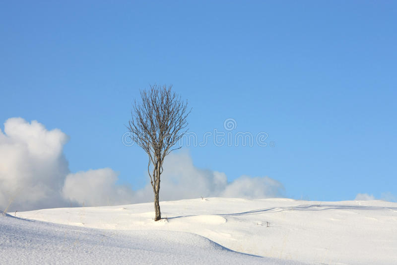 Arctic tree sky & clouds. A small birch tree on the top of a Lofoten hill on a sunny winter day stock images