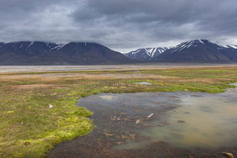 Arctic tundra in summer, Svalbard, Norway royalty free stock photos