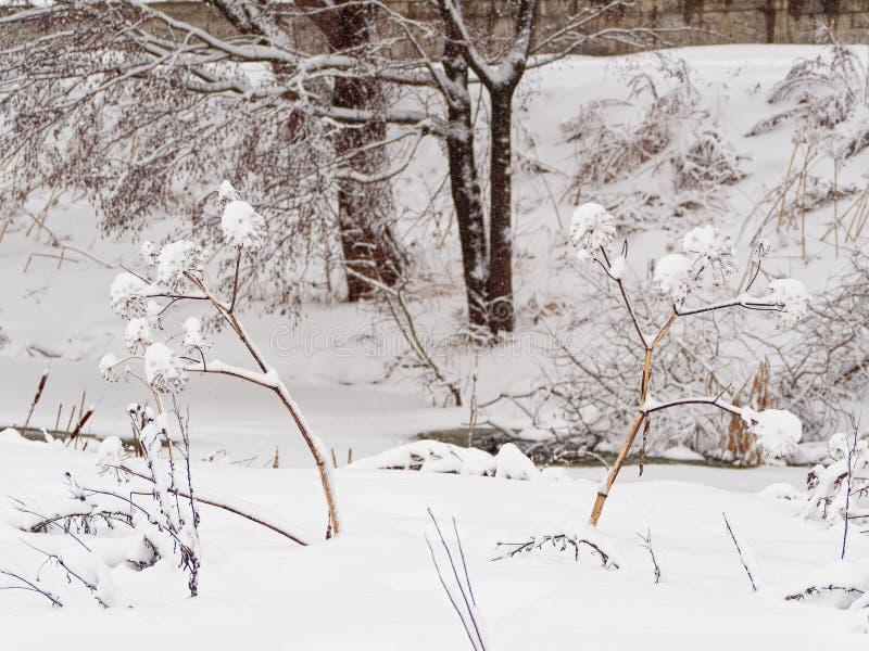 Arcydzięgiel marznący Stycze? 33c krajobrazu Rosji zima ural temperatury fotografia royalty free