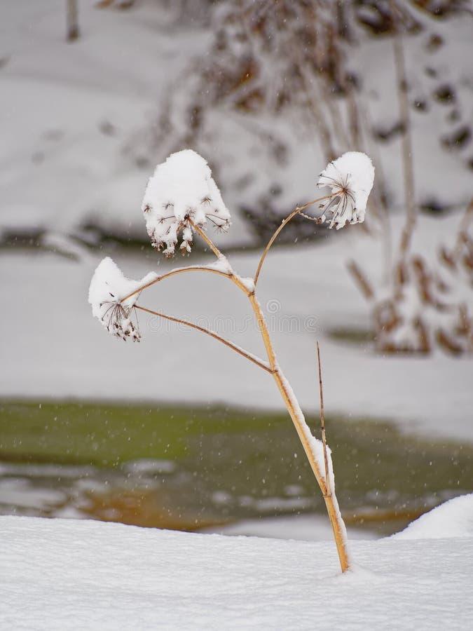 arcydzi?giel Arcydzi?giel marzn?cy Stycze? 33c krajobrazu Rosji zima ural temperatury zdjęcie royalty free