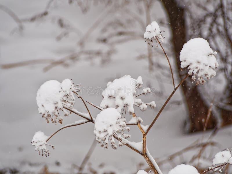 arcydzi?giel Arcydzi?giel marzn?cy Stycze? 33c krajobrazu Rosji zima ural temperatury obraz stock