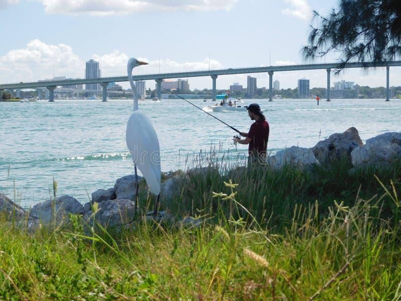 Ardea alba in Tampa, Florida lizenzfreies stockfoto