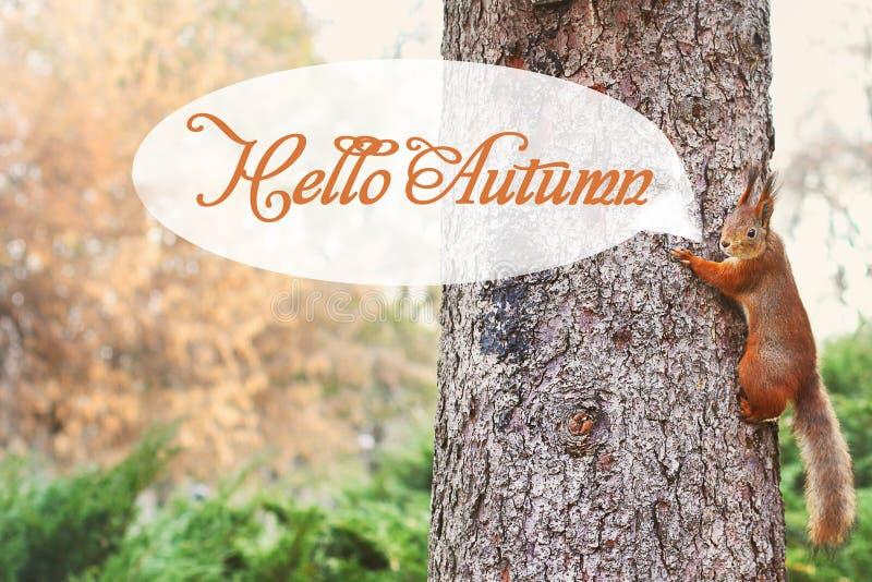 Ardilla curiosa Ardilla roja Ardilla Otoño Invierno Ardilla de Forest Beautiful fotografía de archivo libre de regalías