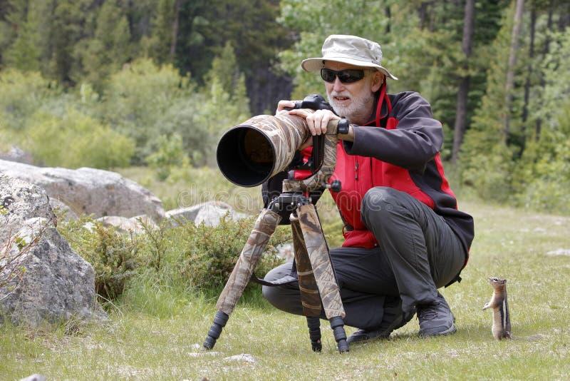 ardilla de tierra De oro-cubierta observando a un fotógrafo de la fauna fotos de archivo