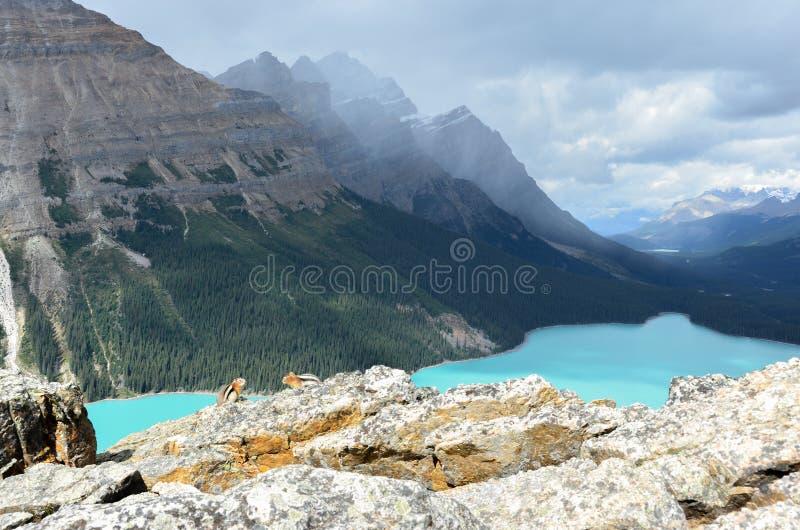Ardilla del lago Peyto en las rocas 1 imagenes de archivo