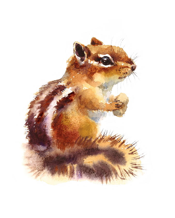 Ardilla listada que come el ejemplo Nuts de los animales salvajes de la acuarela pintado a mano libre illustration