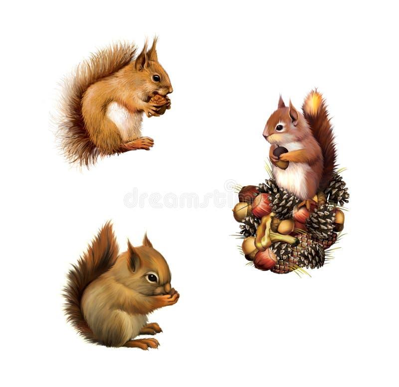 Ardilla roja que come, ardilla del bebé, pata gris americana de la ardilla presionada ansiosamente a su pecho, aislado en el fondo stock de ilustración