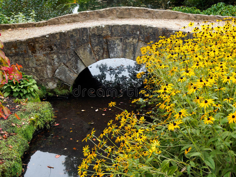 ARDINGLY, SUSSEX/UK - OCTOBER 09 : Black-eyed Susan Flowers by a. Small Bridge at Wakehurst Place in Sussex on October 09, 20016 stock images
