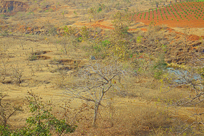 Area around Nagpur, India. Dry foothills with orchards farmers gardens. The area in district Nagpur, Maharashtra. India. Dry foothills with shrubs and peasant stock photo