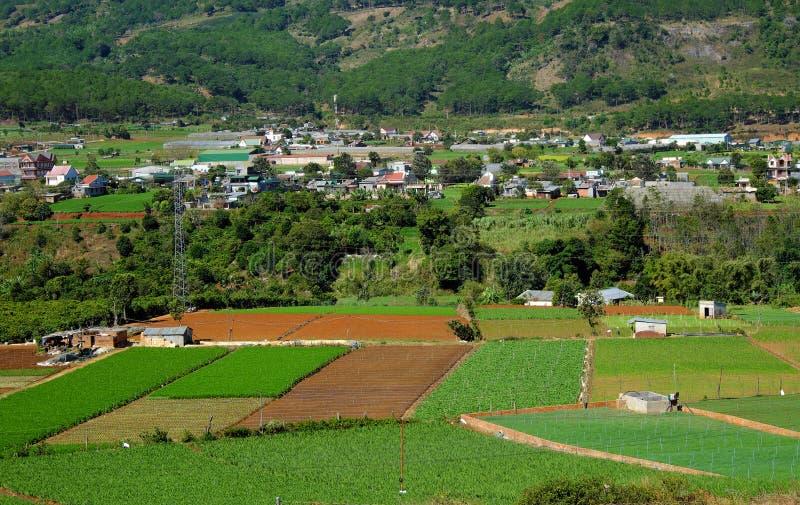 Area di agricoltura, Dalat, Vietnam, campo, azienda agricola di verdure immagini stock libere da diritti