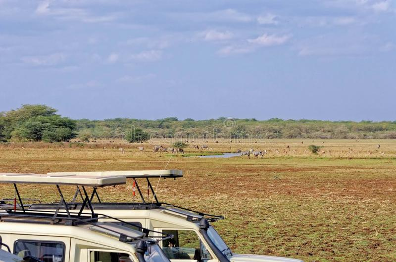 Area di conservazione di Ngorongoro, TANZANIA fotografia stock