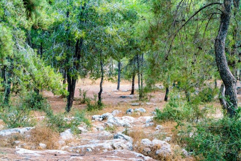 Area e rocce della foresta fotografia stock