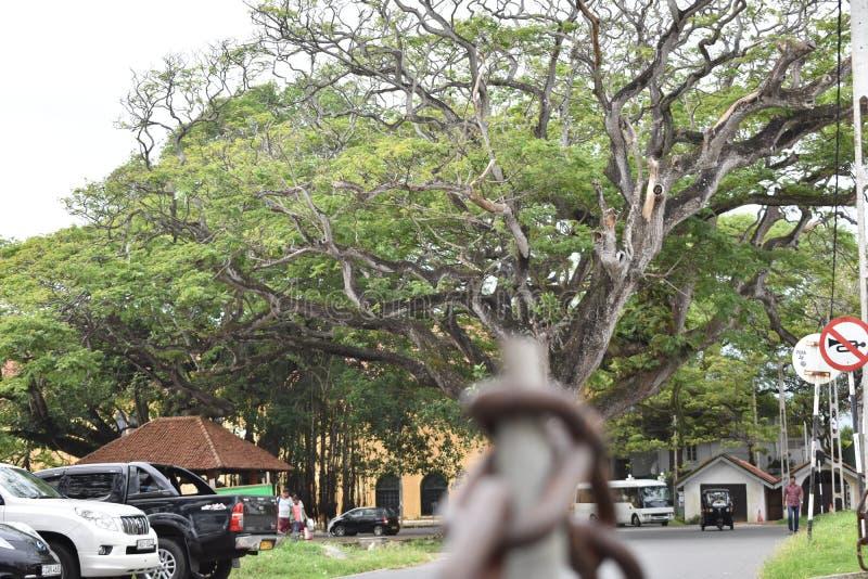 Area forte di Galle nello Sri Lanka immagini stock