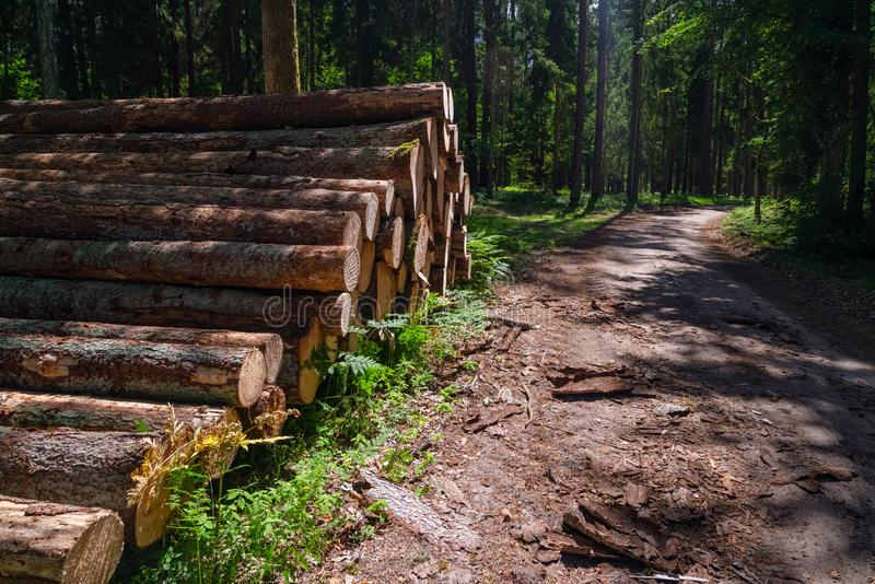 Area of illegal deforestation of vegetation in the forest. Cut the tree and wooden trunks from the forest. A pile of cut wood near stock photography