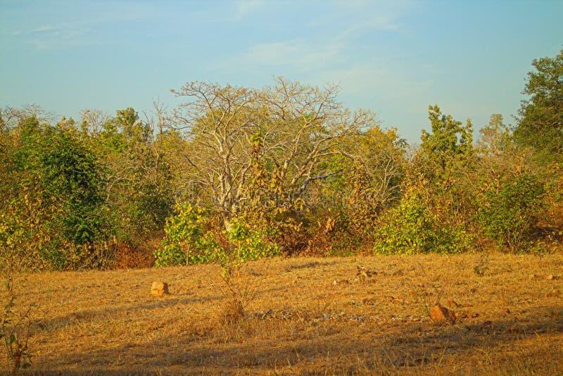 Area intorno a Nagpur, India Colline pedemontana asciutte fotografia stock libera da diritti