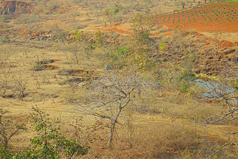 Area intorno a Nagpur, India Colline pedemontana asciutte con i giardini degli agricoltori dei frutteti fotografia stock