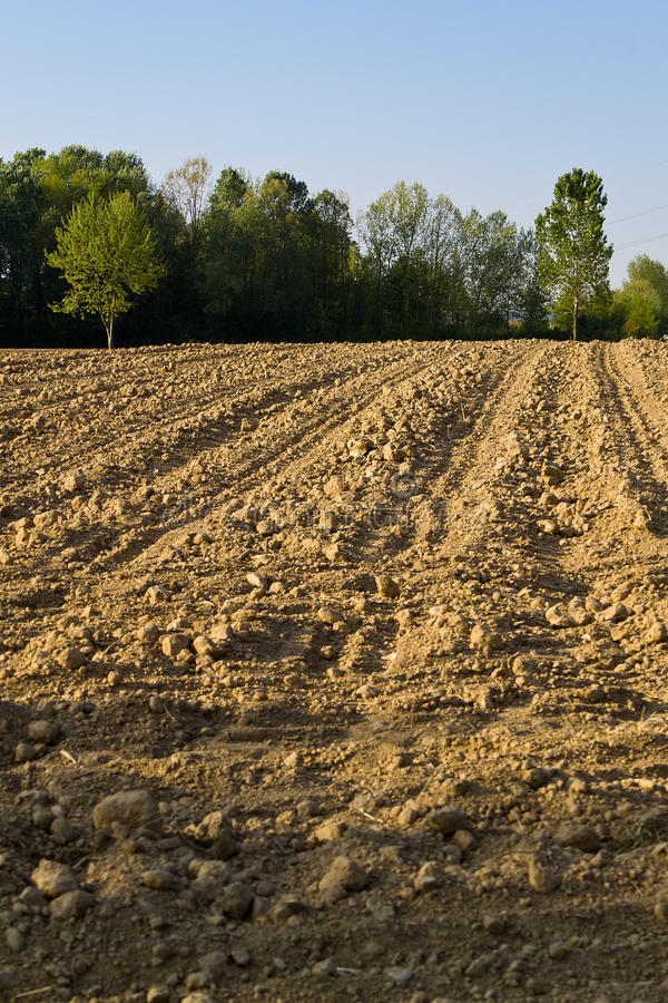 Free Area Of Arable Land Royalty Free Stock Photo - 19602485