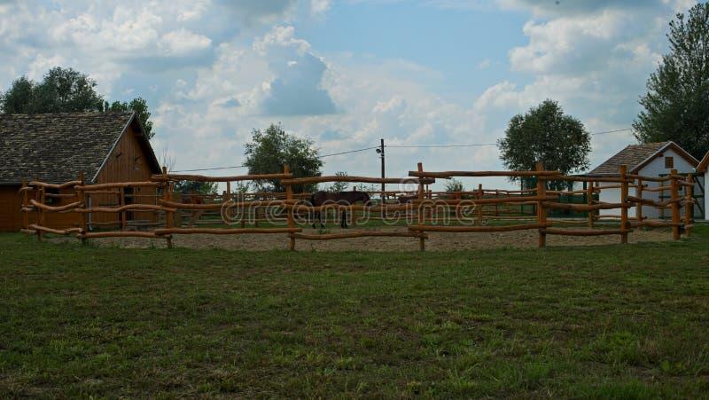 Area recintata con un cavallo marrone dentro  fotografie stock