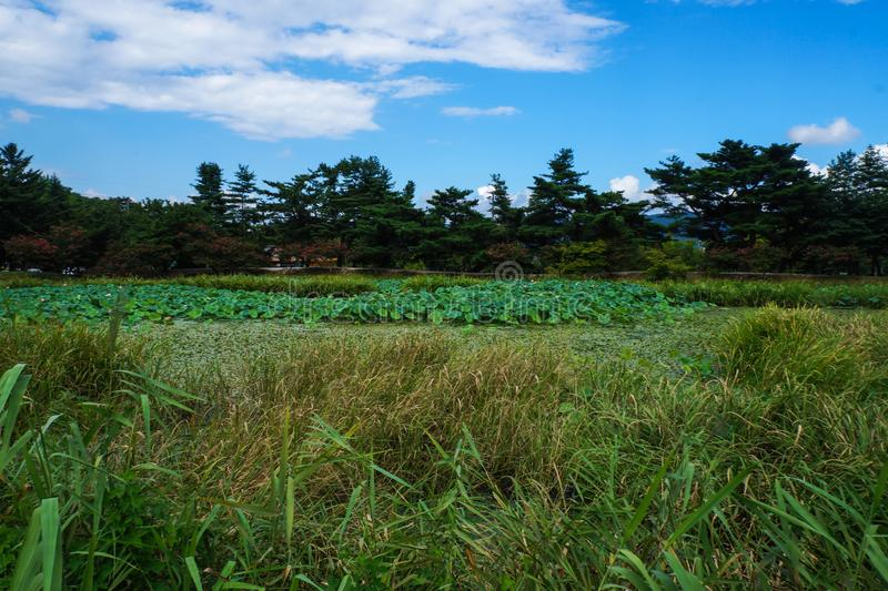 area scenica dello stagno di Corea del Sud gyeongju fotografia stock