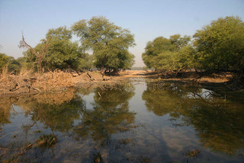 Area umida circondata dagli alberi fotografia stock libera da diritti