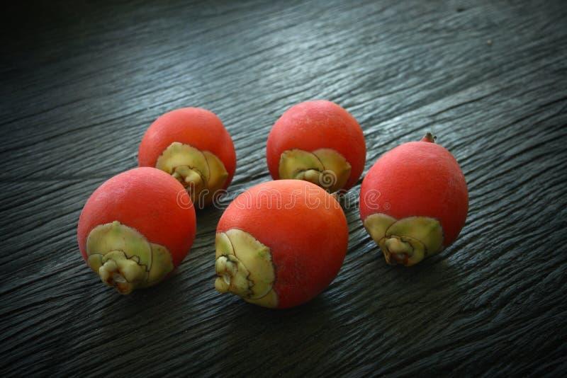 areca betel ο φοίνικας καρπού σχίζ&epsilo στοκ φωτογραφία με δικαίωμα ελεύθερης χρήσης