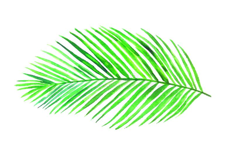 Areca Palm leaf top view isolated on white hand painted watercolor illustration, design element royalty free illustration