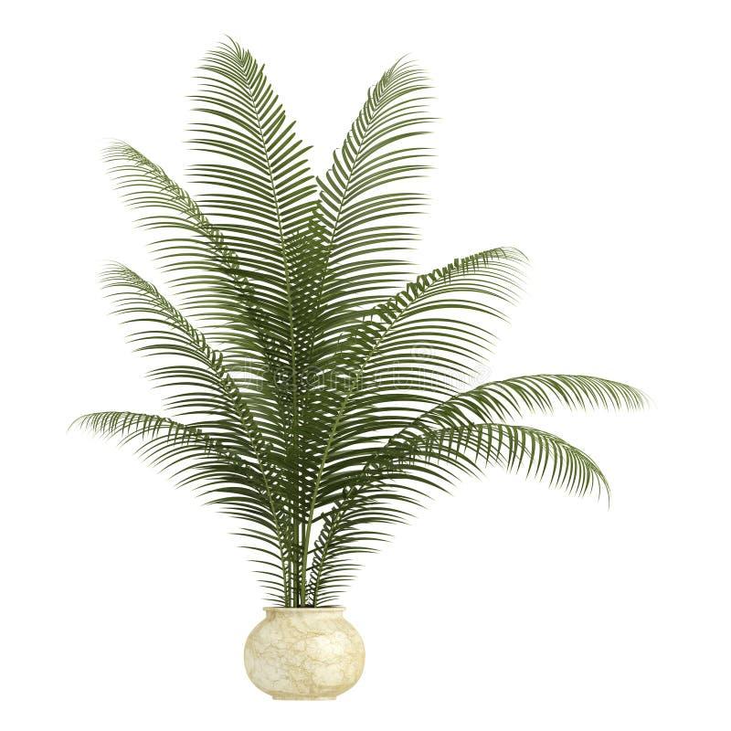 Arecaen gömma i handflatan houseplanten stock illustrationer