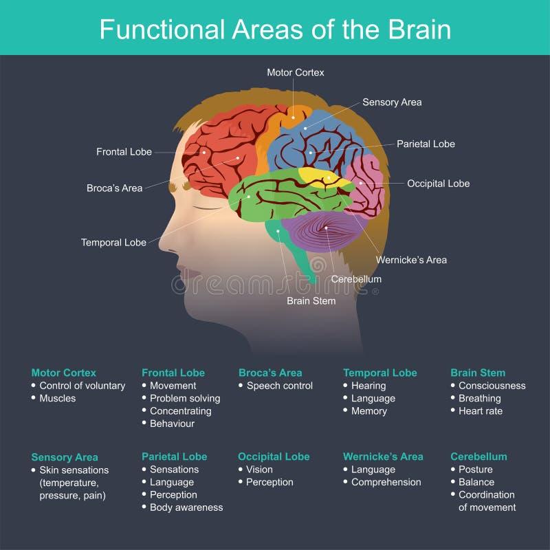 Aree funzionali del cervello royalty illustrazione gratis