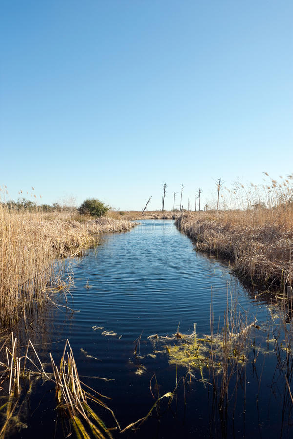 Aree umide della Florida sceniche immagine stock