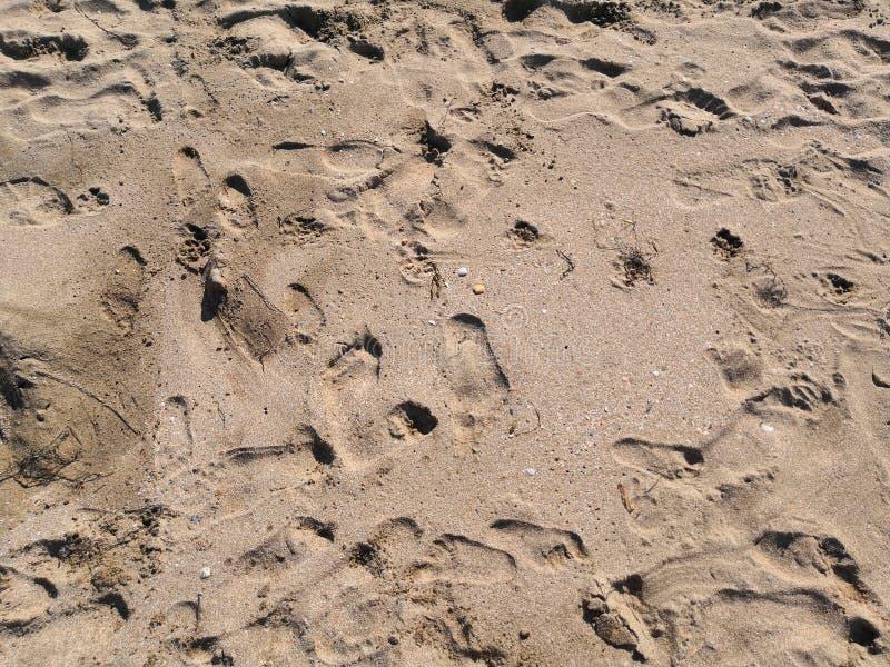 Areia com as cópias do pé dos povos, crianças, o fundo da calma natural Viagem do verão fotografia de stock