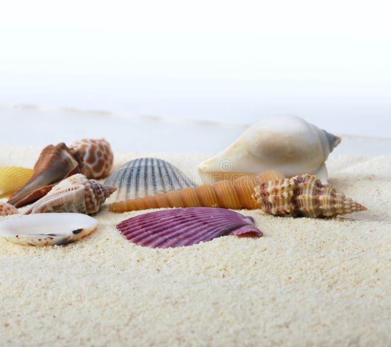 Areia com escudo do mar foto de stock royalty free