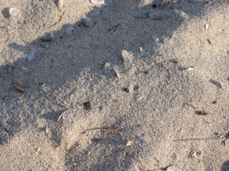 Areia fina iluminada iluminada pela luz solar foto de stock