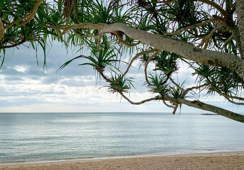 Areia praia de manhã com céu cinza Exibir a partir de baixo da árvore praia tropical, fundo de férias de verão Cenário de tranqui imagens de stock