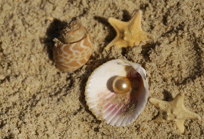 Areia, shell e estrela do mar foto de stock royalty free