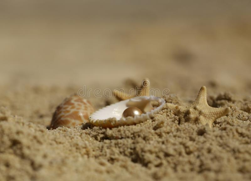 Areia, shell e estrela do mar imagens de stock royalty free