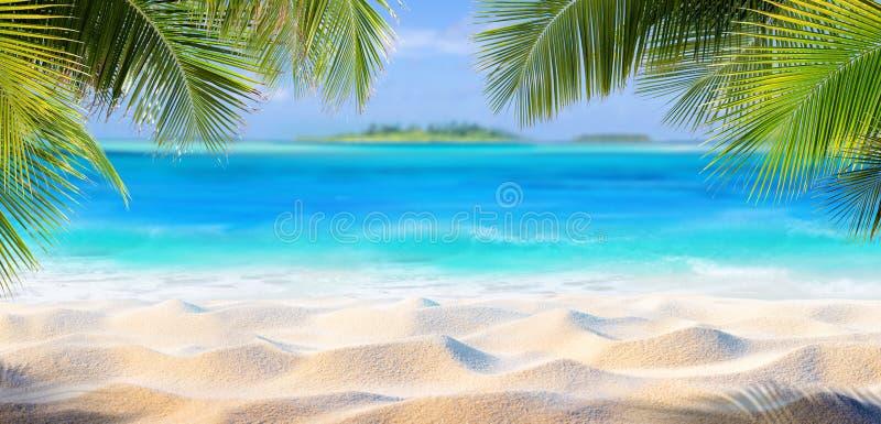 Areia tropical com folhas de palmeira fotografia de stock