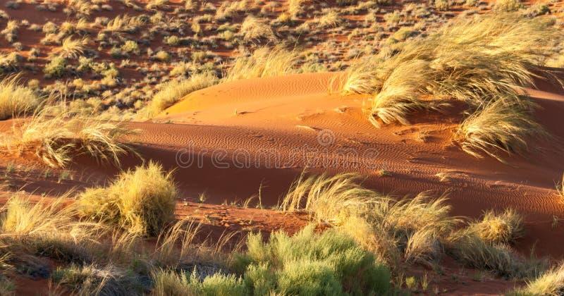 Areia vermelha do deserto de Namib foto de stock royalty free