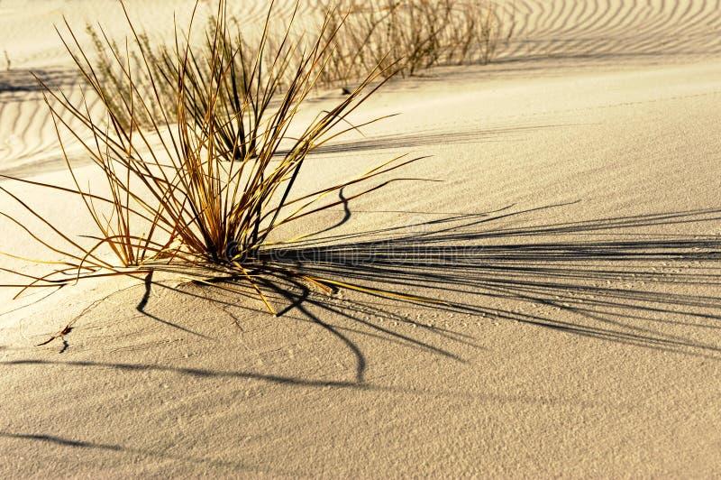 Areias brancas fotografia de stock royalty free