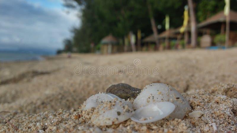 Areias e shell do mar foto de stock royalty free