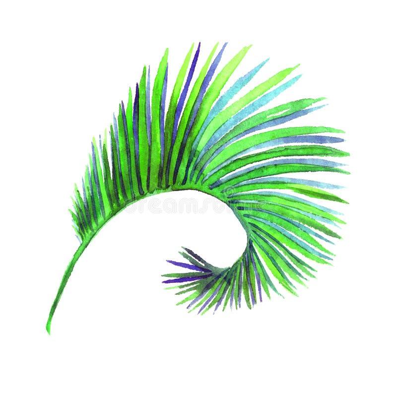 Arekanuss-Palme kurvte das Blatt, das auf weißer handgemalter Aquarellillustration, Gestaltungselement lokalisiert wurde vektor abbildung