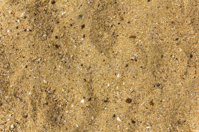 Arena amarilla con el primer de los guijarros y de las cáscaras del mar textura superficial natural fotos de archivo