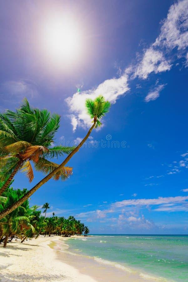 Arena blanca hermosa de la playa del paraíso con la palmera en el centro turístico foto de archivo