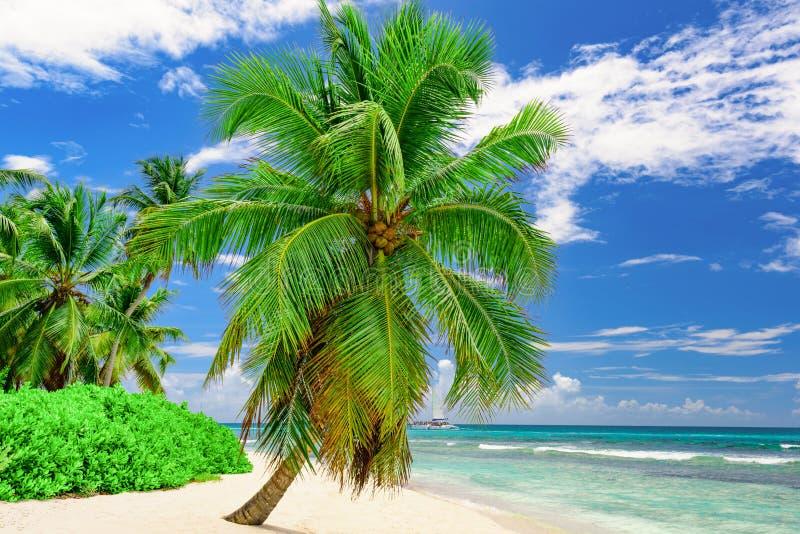 Arena blanca hermosa de la playa del paraíso con la palmera en el centro turístico foto de archivo libre de regalías